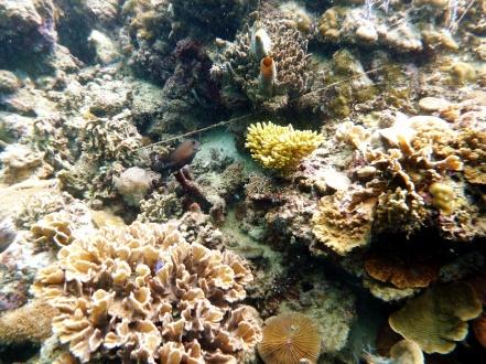 Bulupoloe's underwater habitat...