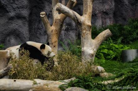 in Panda pavilion